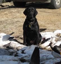 2010 Arkansas Goose Hunting Trip